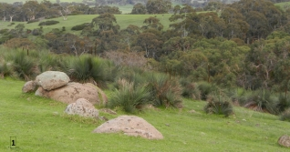 Collection of granite erratics in large strewnfield west of Mt Alma road